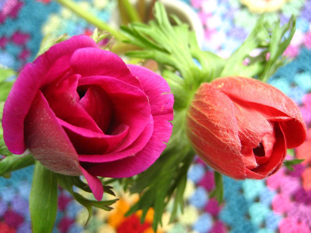 Floral Inspiration | Designer Q & A Attic24